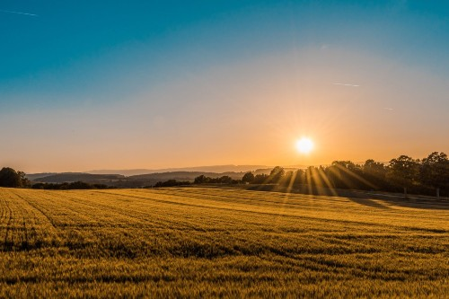 Photo of sun shining over farmland.